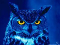 NightOwl61's picture