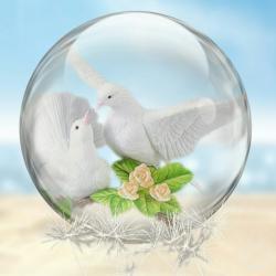 Dove's picture
